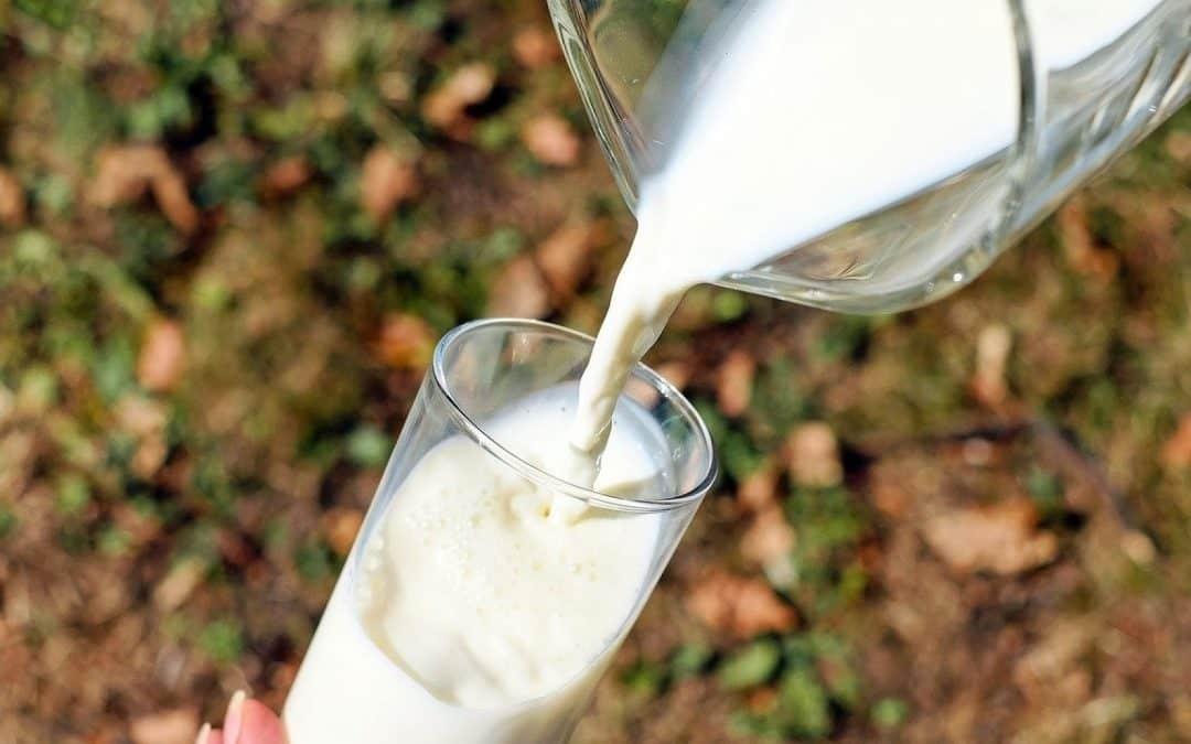 Un lait vachement bon